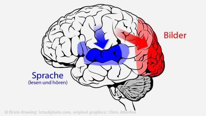 Gehirn: Verarbeitung von Sprache und Bildern